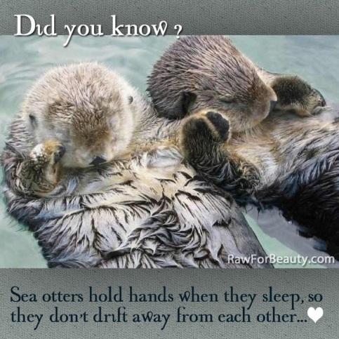 SATP otters