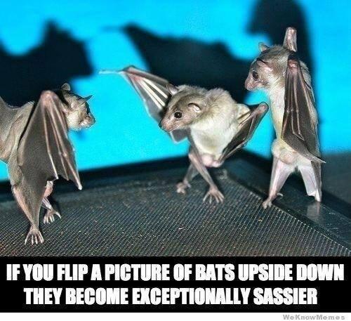 SATP bats